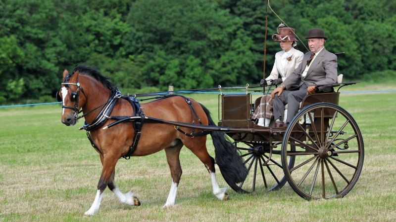 Private Driving, Brocklesby Show